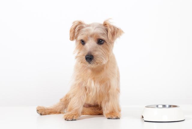 犬がご飯を食べないときの原因