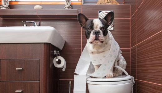 犬のうんちが異常に臭い原因と改善へ向けたドッグフードの選び方