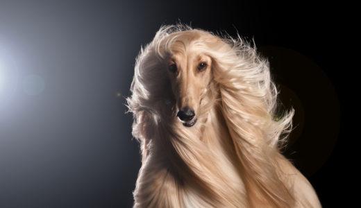 犬の毛艶や毛並みを良くするドッグフード3選