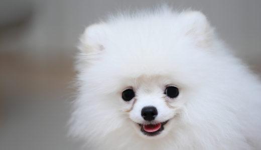 犬の涙やけに改善効果がある獣医師監修ドッグフード