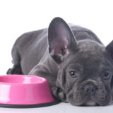 犬がドッグフード(餌)を食べない原因はわがまま?ストレス?病気?